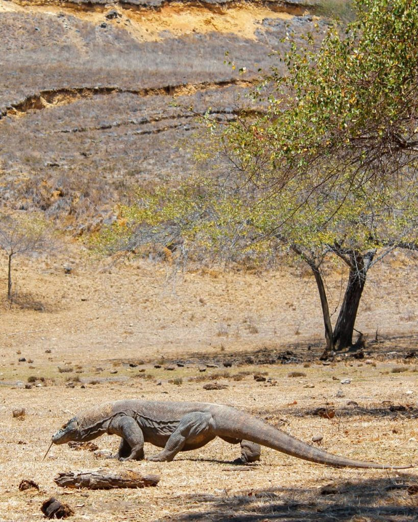 Interesting Facts on Komodo Tour No One Has Told You