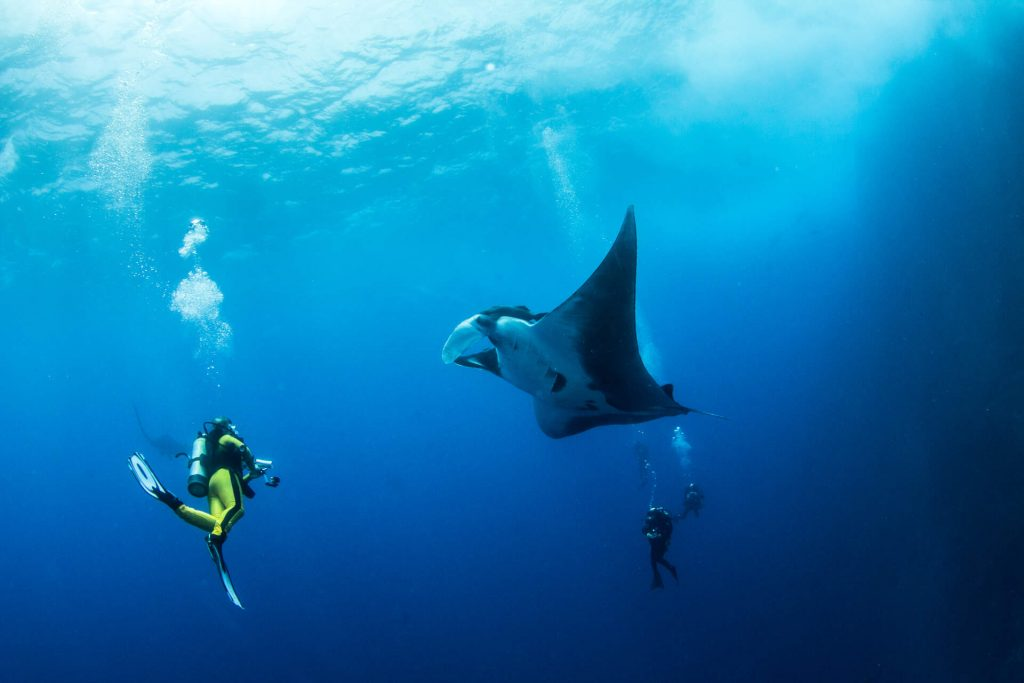 Diving Komodo, Exploring Remarkable Underwater and meet the dragon